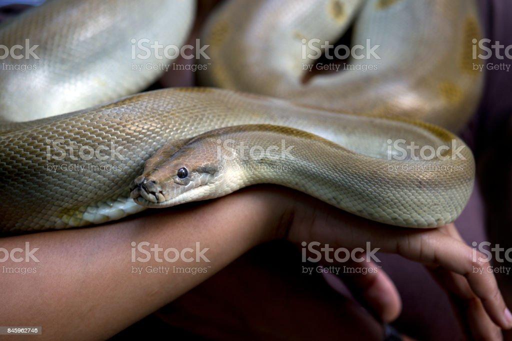 Snake on an arm stock photo