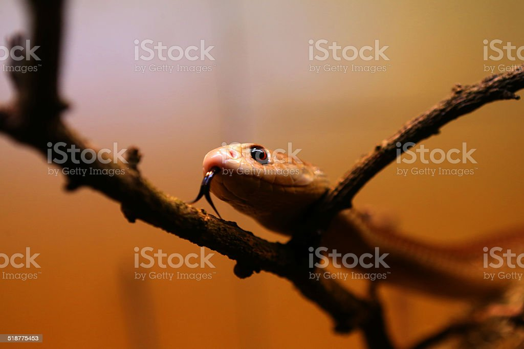 Snake on Tree Branch stock photo