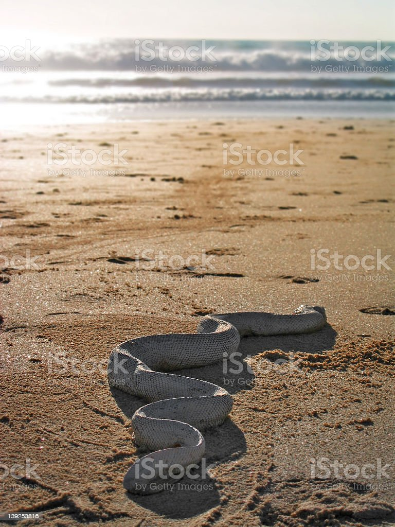 Snake out of Water royalty-free stock photo