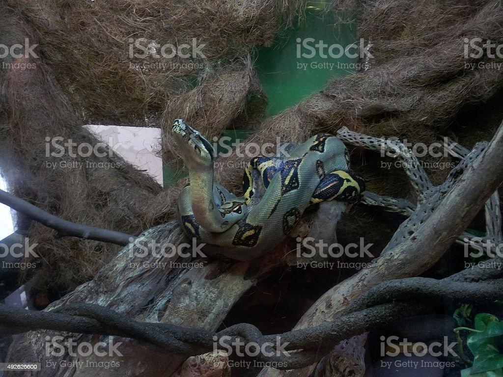 Culebra stock photo