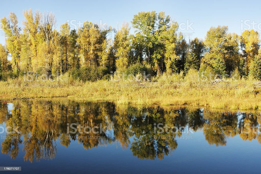 Snake River Sunrise Tree Reflection royalty-free stock photo