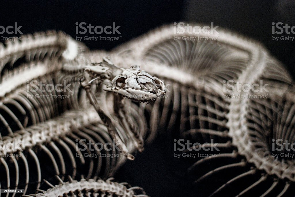 Snake skeleton stock photo