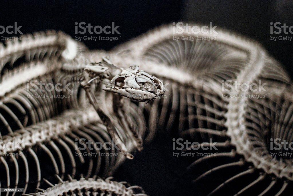 Snake skeleton stock photo