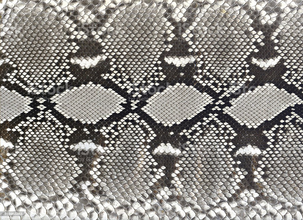 snake skin black and white pattern stock photo