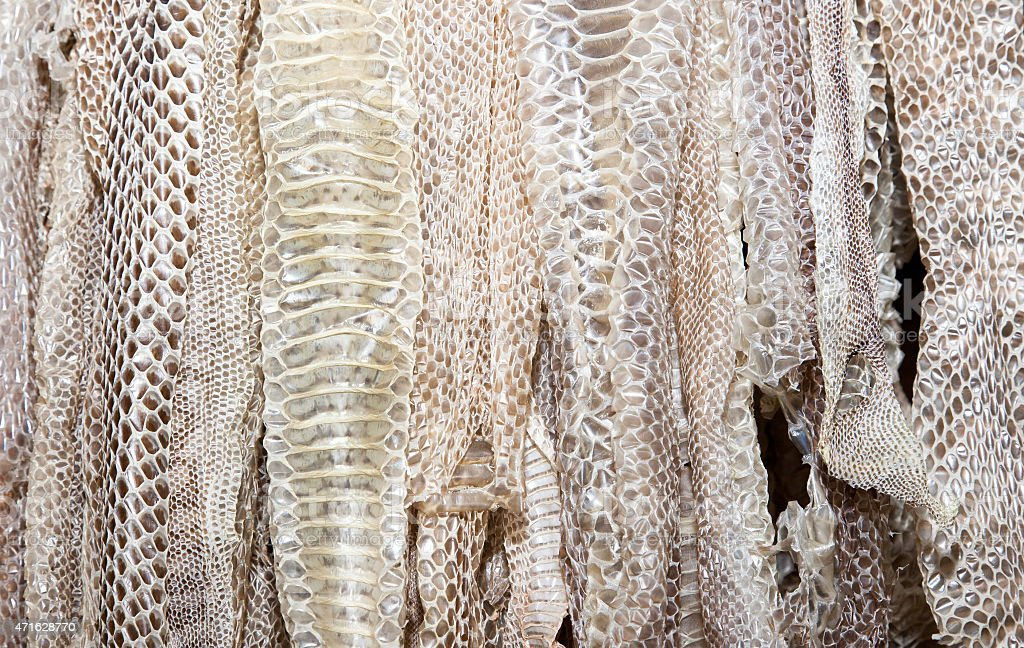 snake skin collection stock photo