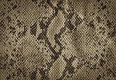 Snake skin golden vintage background