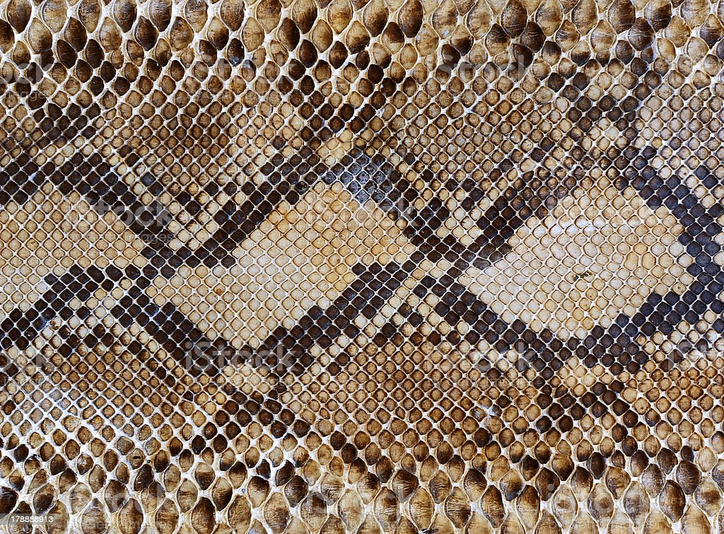 Snake skin pattern background royalty-free stock photo