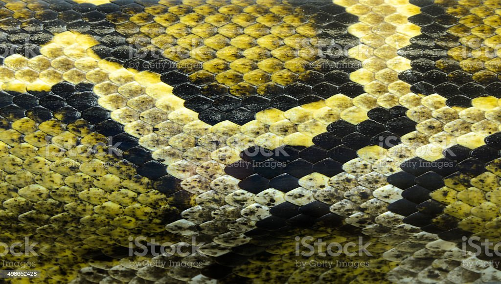 Snake skin textured background stock photo