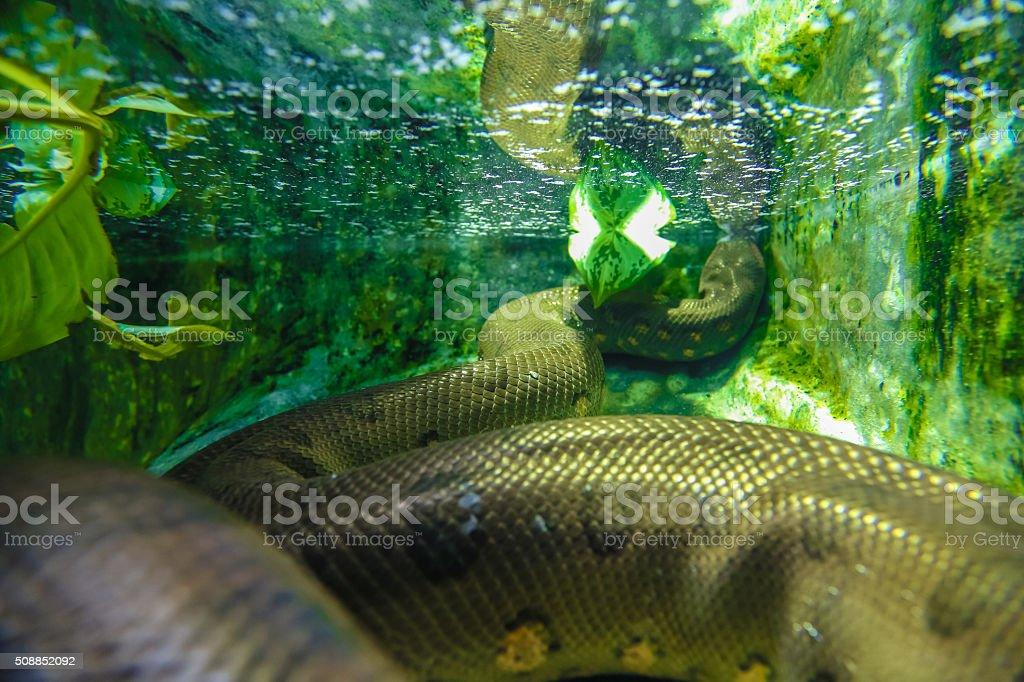 snake under water stock photo
