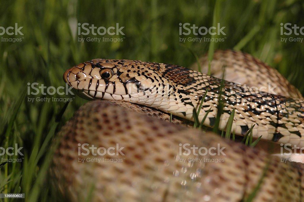 Snake-2 stock photo