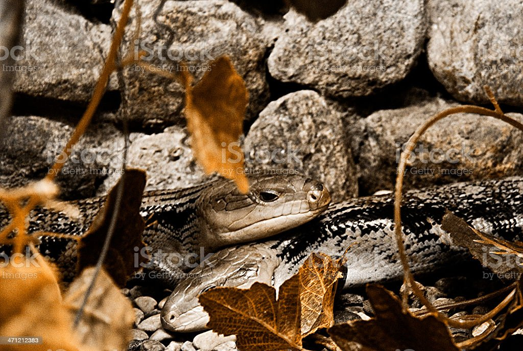 snakes royalty-free stock photo