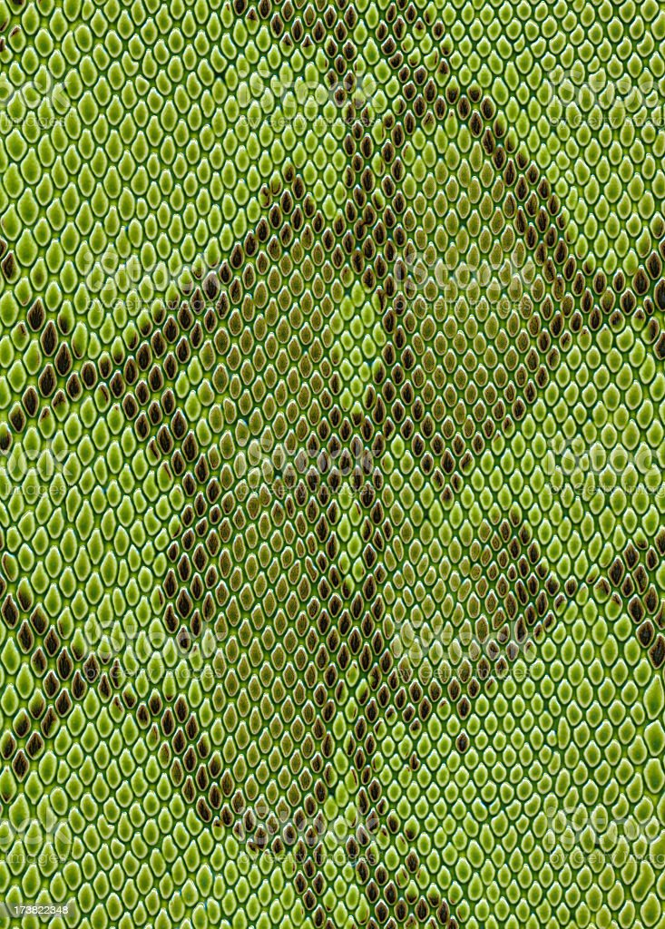 Snake's skin is green in color stock photo