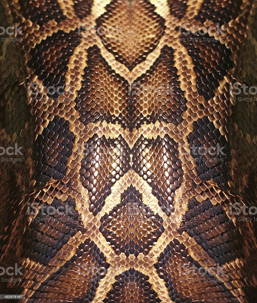 Snakeskin pattern up close with spots stock photo
