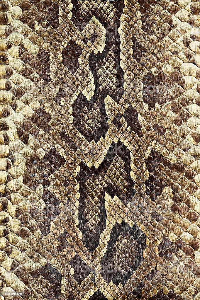 Snakeskin stock photo