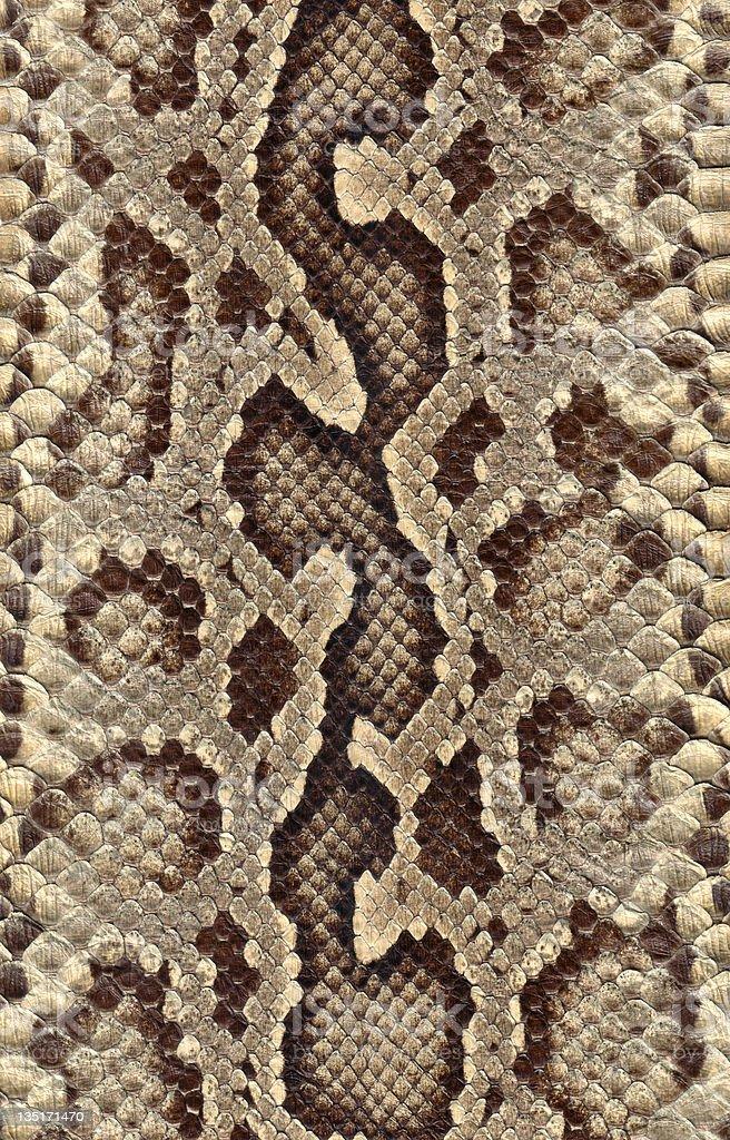 Snakeskin stock photo