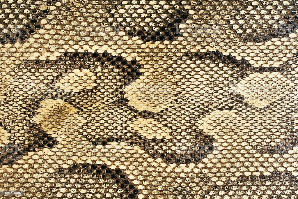 Snakeskin-Texture stock photo