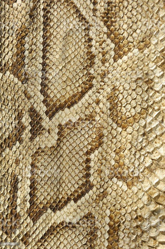 snakeskin-Texture royalty-free stock photo