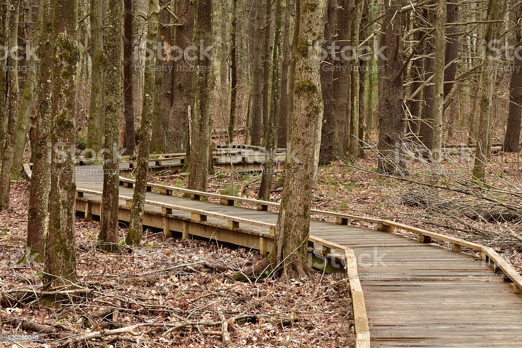 Snaking Walkway Through Protected Forest stock photo
