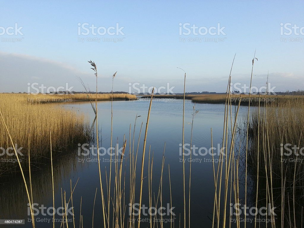 Snape reeds royalty-free stock photo