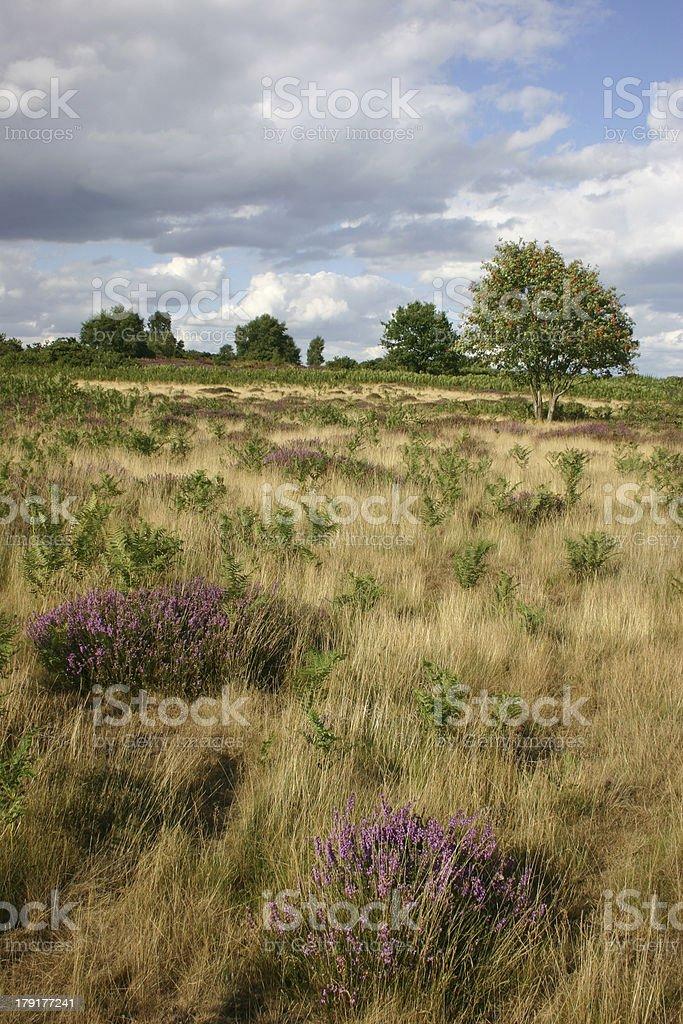 Snape Warren, Suffolk royalty-free stock photo