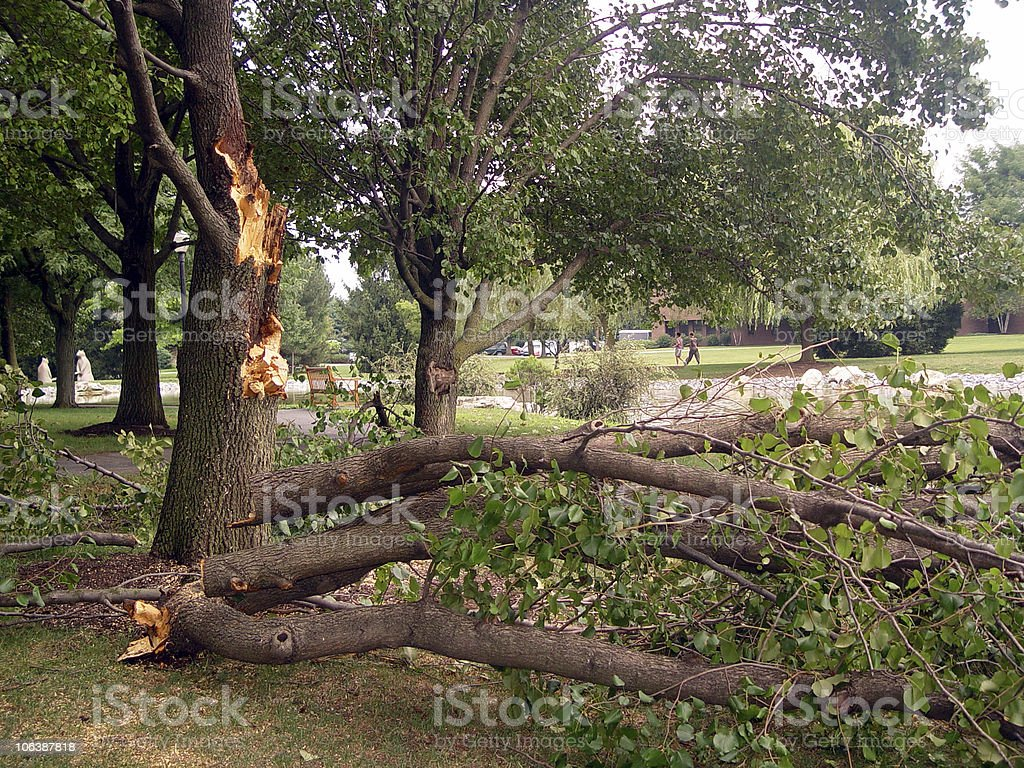 Snapped fallen branches beside damaged tree trunk in a park stock photo