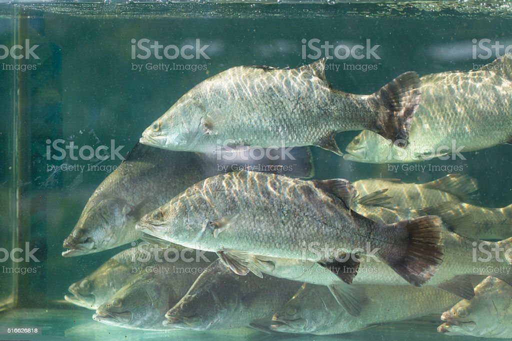 Snapper fish stock photo