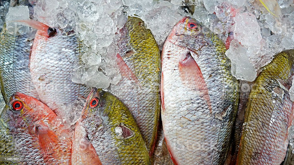 Snapper stock photo
