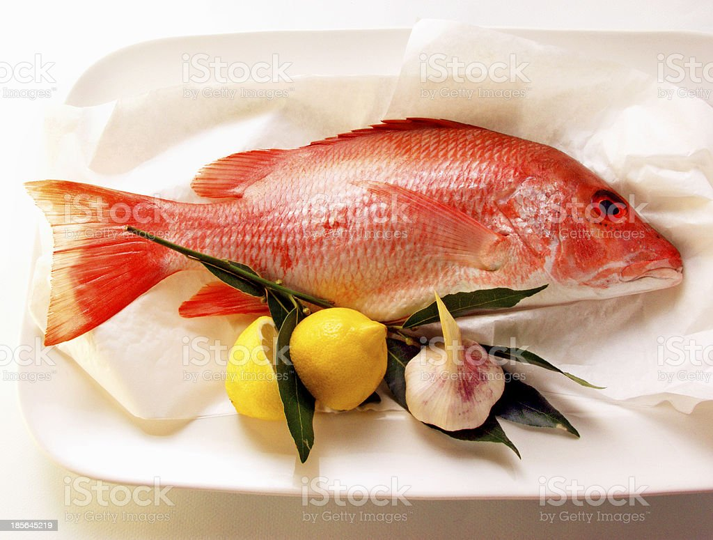 Snapper red fish isolated on white background stock photo