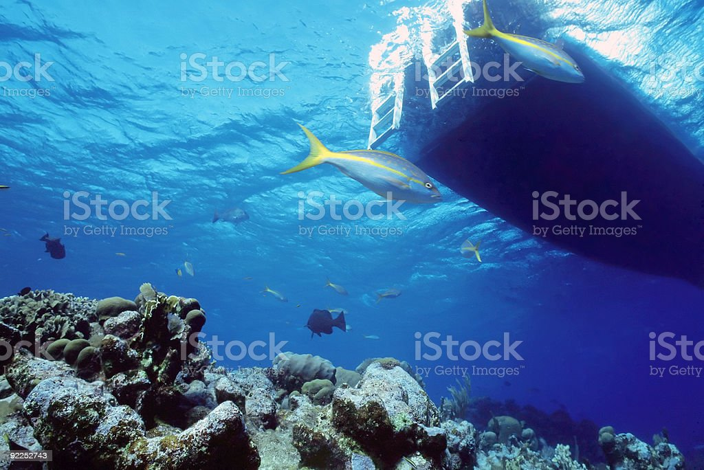 Vivaneau reef photo libre de droits