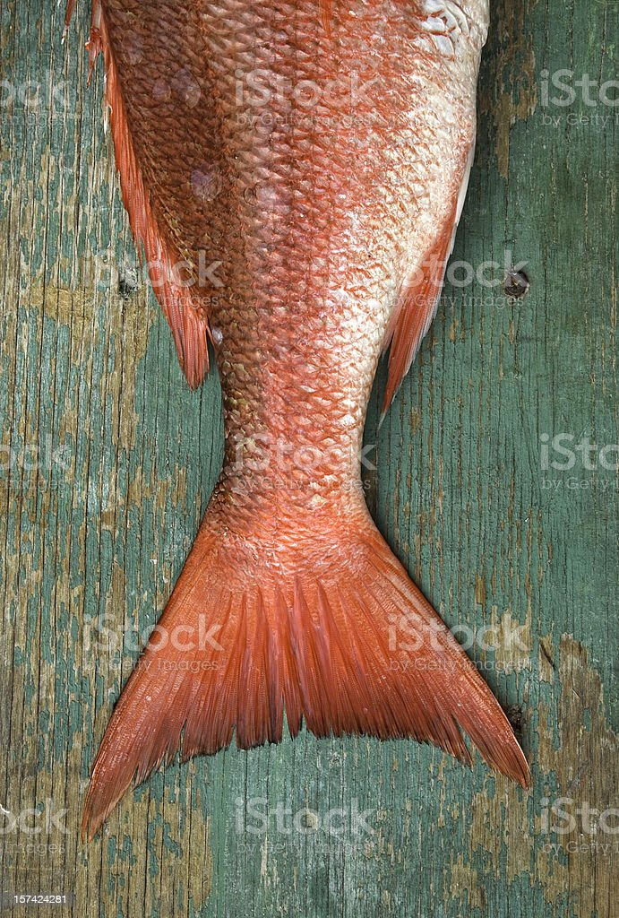 snapper tail stock photo