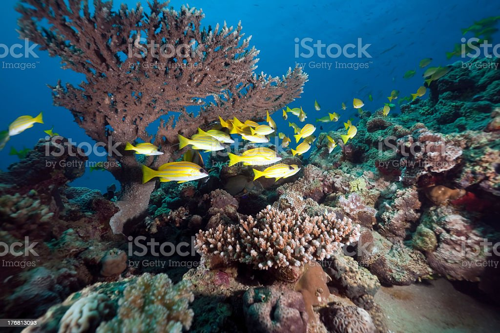 snappers and ocean royalty-free stock photo
