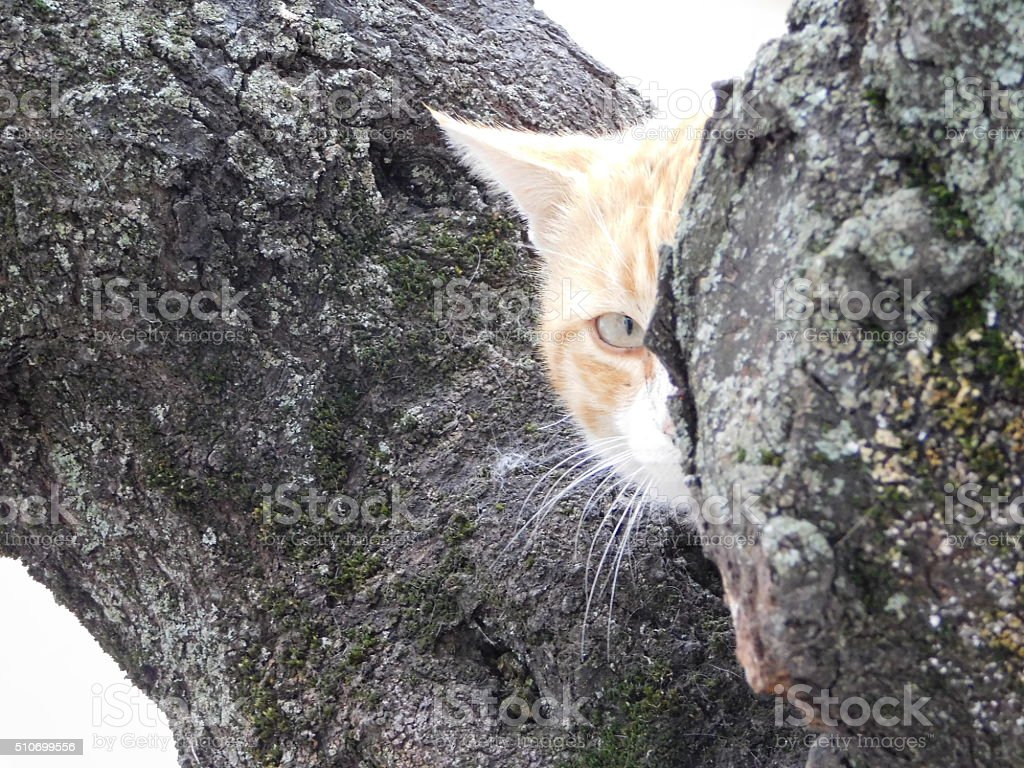 Sneaky cat under a tree full of cats royalty-free stock photo