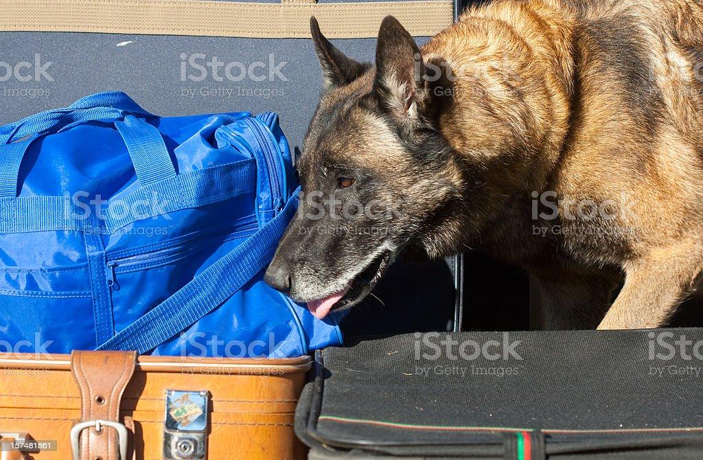 sniffer dog stock photo