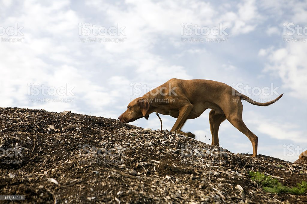 sniffing dog stock photo