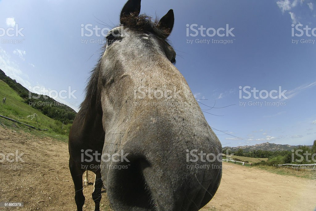 Sniffing the camera royalty-free stock photo