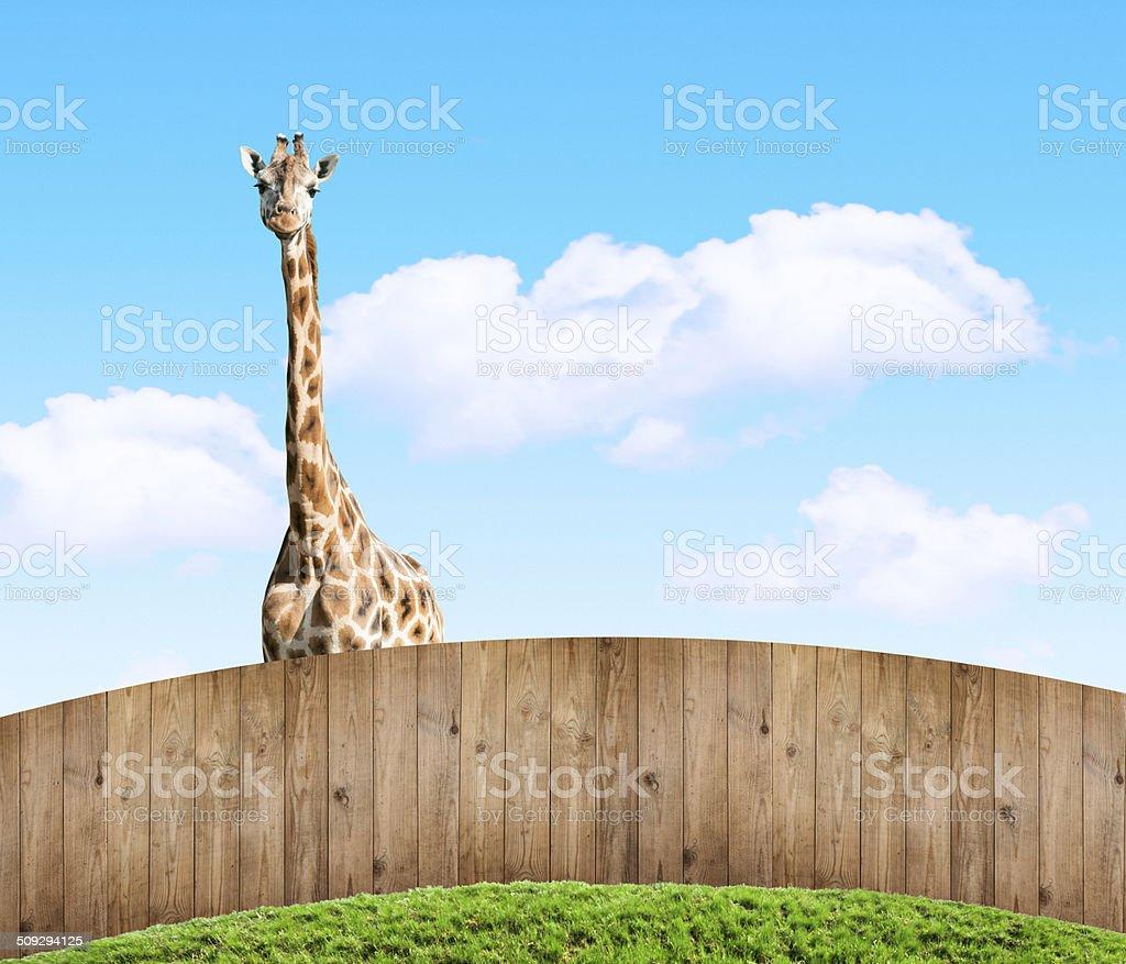 snooper neighbor stock photo