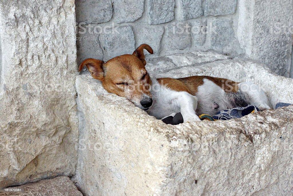 Snoozing Dog. stock photo