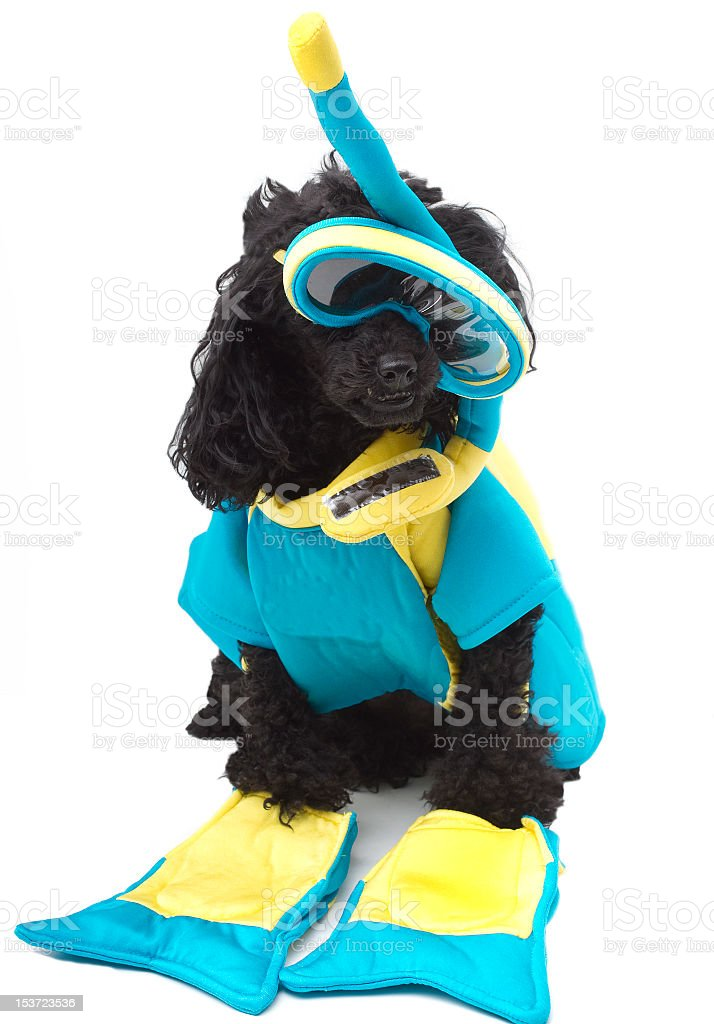 Snorkel Dog stock photo