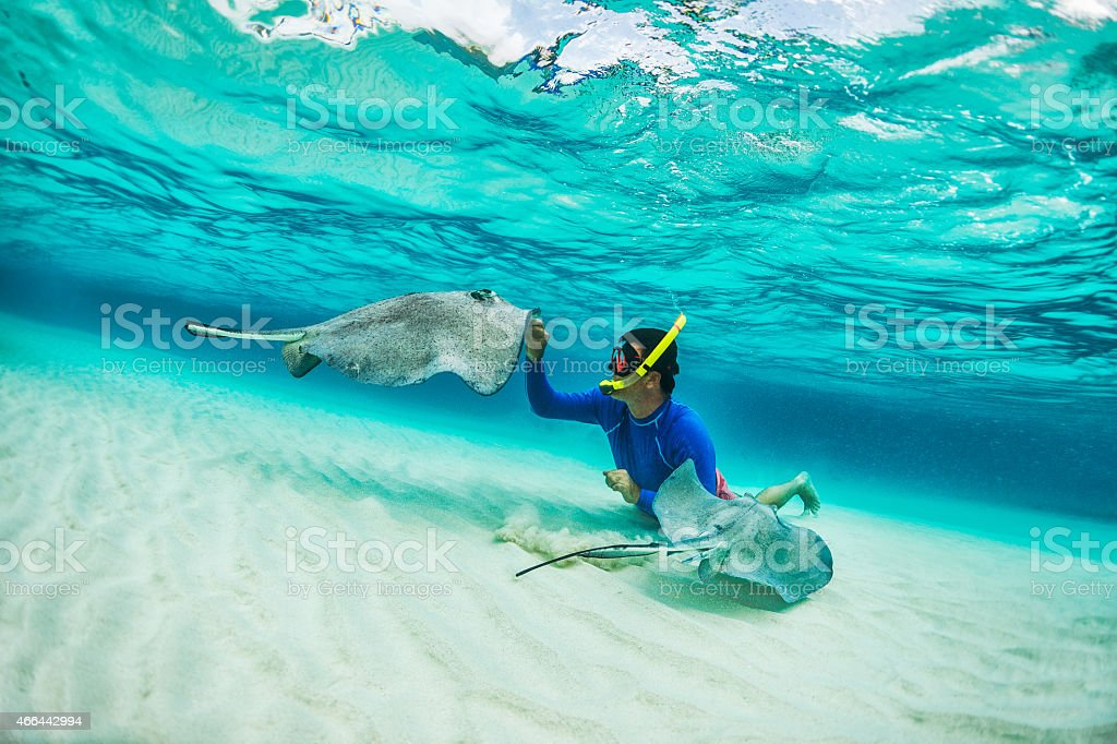 Snorkeler playing with stingray fishes stock photo