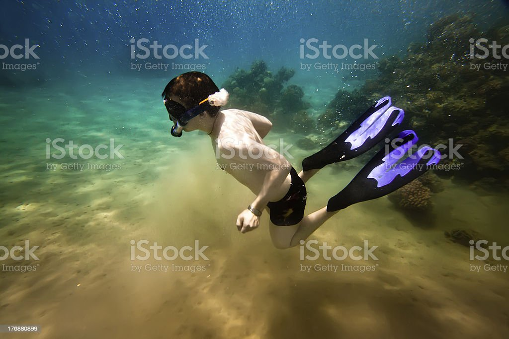Snorkeler. the Red sea royalty-free stock photo