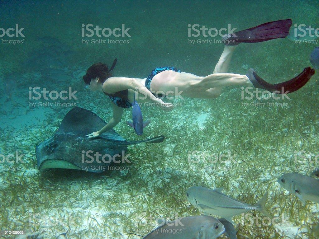 Snorkeler with stingray Hol Chan Marine Reserve Ambergris Caye Belize stock photo