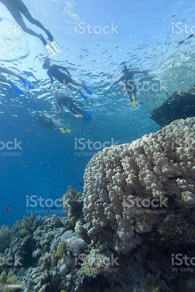 Snorkelers and coral reef stock photo