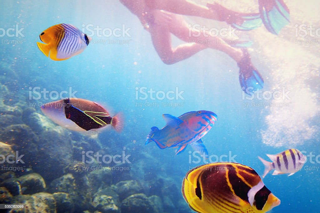 Snorkelers with Variety of Tropical Reef fish in Kauai, Hawaii stock photo