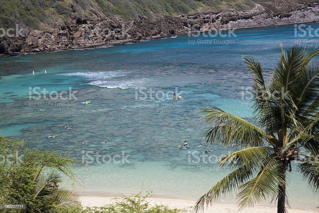 Snorkeling at Hanauma bay stock photo