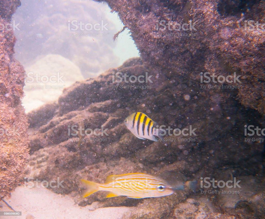 Snorkeling in Bermuda stock photo