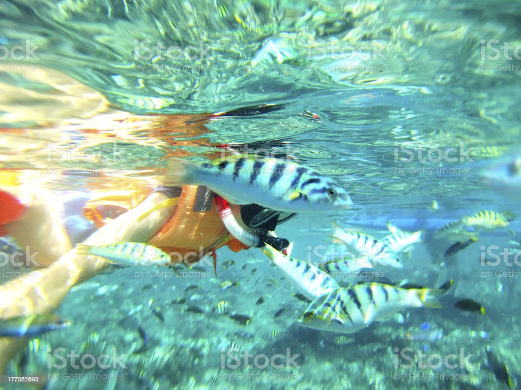 Snorkeling in Dagat Bohol royalty-free stock photo