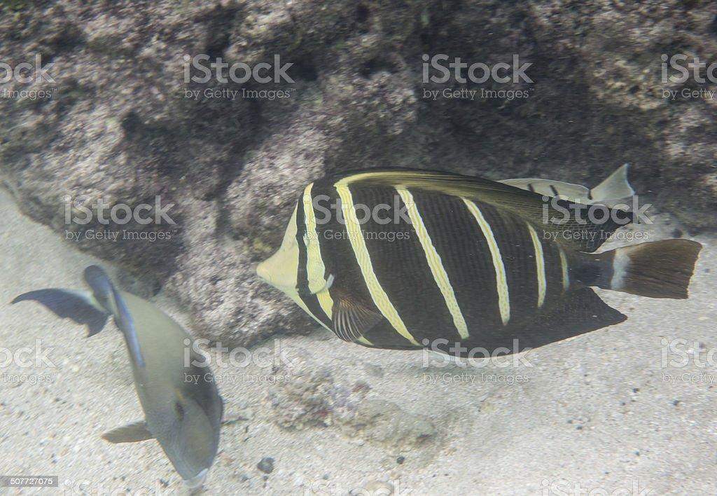 Snorkeling in Hanauma Bay stock photo