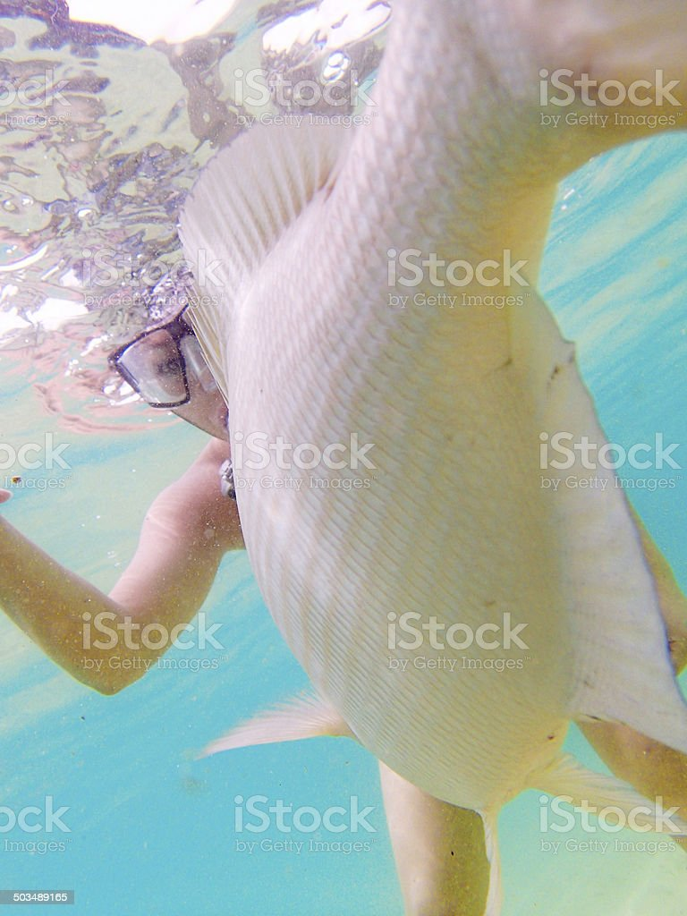 Snorkeling in Tropical Beach Vertical royalty-free stock photo