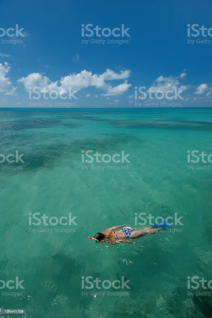 Snorkeling in Tropical Carribean Ocean Water Dry Tortugas stock photo
