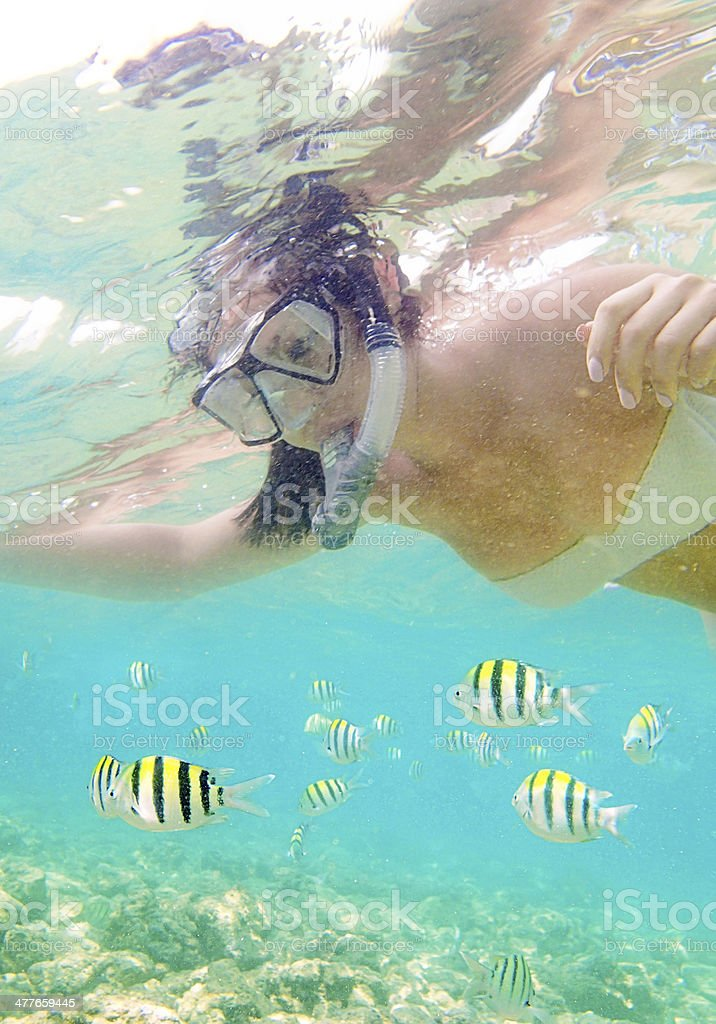 Snorkeling in Tropical Reefs of Hawaii royalty-free stock photo